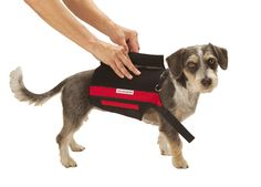 Back Pain In Dogs Back Brace for Dogs http://www.wiggleless.com/2013/03/20/dog-back-pain ...