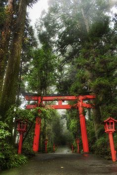 The Rainy Forest in Hakone, Kanagawa, Japan
