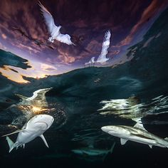 The Finalists of the Bird Photographer of the Year 2021 Are Announced Ocean Photography, Photography Awards, Nassau, Under The Sea Images, Nikon Small World, Reef Shark, Fotografia Macro, Underwater Photographer, Marine Conservation