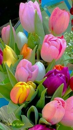 Science Discover exotic flowers names and pictures Tulips Garden Tulips Flowers Exotic Flowers Amazing Flowers Beautiful Roses Pretty Flowers Planting Flowers Colorful Flowers Beautiful Flowers Pictures Beautiful Rose Flowers, Beautiful Flowers Wallpapers, Exotic Flowers, Amazing Flowers, Pretty Flowers, Beautiful Flowers Pictures, Pretty Pastel, Colorful Flowers, Tulips Garden