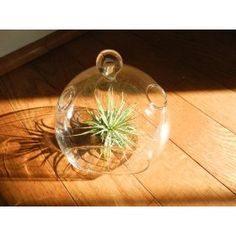 "Air Plant Tillandsia with Hanging Glass Globe 4 1/2"" Wide By Hinterland Trading $11.99"