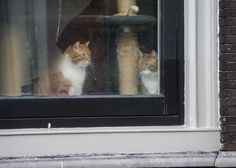 https://flic.kr/p/iDuEEX | Curious cats | Serie: in the windowsill I look to the right and you look to the left.