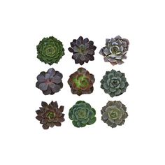 Succulents Assorted Package ❤ liked on Polyvore featuring home, home decor, floral decor, fillers, plants, flowers, nature, extras, backgrounds and embellishments
