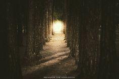 ronaldo ichi / 2016  Portrait @ronaldoichiphotography Cosplay @caaphotoshootmagazine  #自然  #写真 #フォトグラフィー #カメラマン#photography #photo #ronaldoichi #nature #naturephotography #dailyphoto #photographer #fotografia #instagramers #natureza #fotografo #lightroom #adobe #florest #tree #arvores