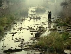Black Dog sure-footed through the mires of the mind.  (Nostalgia, Tarkovsky)