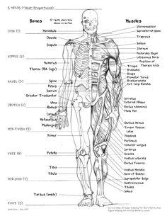 bones of the human body | muscle_body_part_names_anatomy_human_bones_drawing_names_science ...