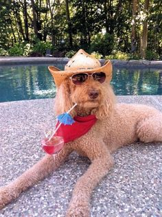 Paws for refreshment: 14 photos of pets on vacation (Submitted by Teresa Dainesi / UGC)