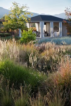 Ornamental grasses are soft move in the wind dont use as much water as flowering plants and have a country agrarian feel says Lewis Scott Lewis vineyard retreat Northern. Meadow Garden, Garden Cottage, Landscape Architecture, Landscape Design, Contemporary Landscape, Vineyard Haven, Stipa, Coastal Gardens, Modern Gardens