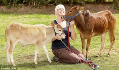 Owner Jay Brittain's new additions to her Small Breeds Farm Park near Kington, Herefordshire are zebus cows - and are the smallest cows in the world Miniature Cow Breeds, Miniature Cattle, Small Cow, Small Farm, Minature Cows, Breeds Of Cows, Mini Cows, Mini Farm, Puppies