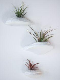 Handmade ceramic polypore wall planters/ set of 3