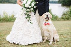 5 Tips for Taking Pictures With Your Dog at an Engagement Session or Wedding « Natalie Franke