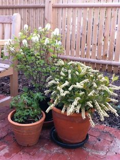 Balcony gardens – Planting Natives in pots, baskets and boxes | For urbanites and people on the move | | by Heather McCargo