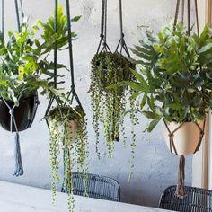 Interieurtrends 2017 hangplanten Plant Wall, Plant Decor, Wall Hanger, Plant Hanger, Hanging Plants, Indoor Plants, Bohemian Interior, My New Room, Houseplants