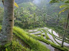 Szintén indonéz tájkép
