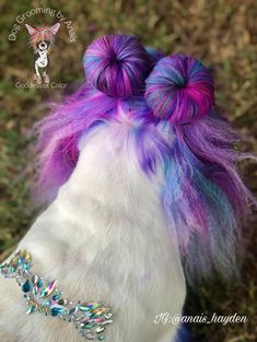 Stunning Anaïs Hayden work done with OPAWZ Permanent Dog Hair Dyes. Bright and Vibrant colors for a Style that will last more than 20 washes. Great for professional use and Creative Grooming Competitions. Let your pets stand out from the rest! Goldendoodle Grooming, Poodle Grooming, Dog Hair Dye, Dyed Hair, Grooming Shop, Pet Grooming, Creative Grooming, Permanent Hair Dye, Cute Little Animals