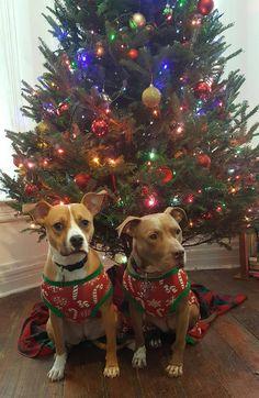 First Christmas together http://ift.tt/2igiUnU
