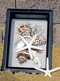BEACH DECOR seashell shadow box, black and white, nautical decor..