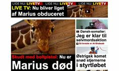 Danish zoo sparks outrage by killing healthy giraffe
