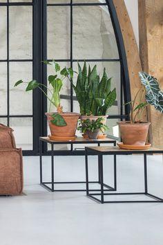Trendhopper ● Zet verschillende planten bij elkaar voor een groots effect in je interieur. Hier staan ze op bijzettafel Fishtale.
