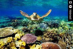 Imagem show pra desejar bom dia!  Repost @hbbrasil  Parada obrigatória para quem estiver na Ozzy: a Grande Barreira de Coral. #BornInAustralia #JoinTheAdrenaline #WildOzzy #greatbarrierreef by kilokosurfshop http://ift.tt/1UokkV2