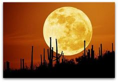 Super Moon ~  Jodi Summers ~  The SoCal Investment Real Estate Group ~  Sotheby's International Realty ~  jodi@jodisummers.com ~  www.SoCalGreenRealEstateBlog.com