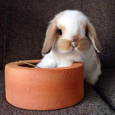 Tarocco • bunniesarethebest-batb (via siliconsnow)
