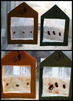 Kikiricosas: Experimento: Invernadero de ventana