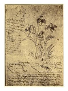 Drawing of Flowers and Diagrams by Leonardo da Vinci Giclee Print by Bettmann at AllPosters.com