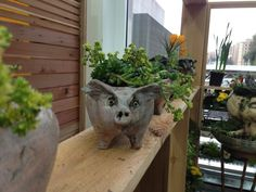 What are you looking at? Need this pottery piggy! In marketplace at @NW Flower & Garden Show ==> theyarden.com