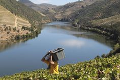 "Quinta do Pôpa, in Tabuaço, ""Vindimas à do Pôpa"", WIne Harvest, Douro Valley, Portugal"