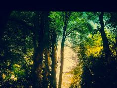 ©Focus to the Light, Breath with Trees, Smile to the Unknown Journey photography by Iris Sun  www.irisunart.com
