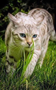 #Beautiful #Nature #Animals - Klári Beke - Google+