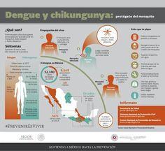 El virus del Dengue