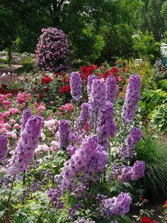 Lovely Rosengarten Zweibr cken deux ponts Land Rh nanie palatinat