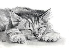 Tabby Kitten Pencil Painting by art-it-art.deviantart.com on @deviantART...Graphit, Bleistift Zeichnung auf 200 Gramm Künstlerpapier ♥ ...Tiger Kitten ...original Pencil drawing ...Format: 18 x 25 cm - 7 x 10 inches
