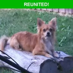 Great news! Happy to report that Jaxon has been reunited and is now home safe and sound! :)