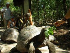 L'isola delle tartarughe, una vera e propria attrazione per i nostri amici single!