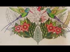 Magical Jungle - Humming Birds - part 2 - YouTube