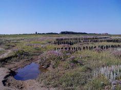 Natur pur im Ostvorland auf Neuwerk - mitten im UNESCO Weltnaturerbe Wattenmeer