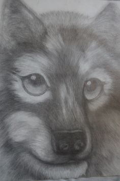 graphite wolf portrait original by 1bluwall on Etsy