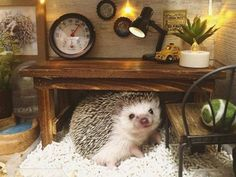 76 Adorable Hedgehog Pics To Celebrate Hedgehog Day Hedgehog Day, Happy Hedgehog, Pygmy Hedgehog, Cute Hedgehog, Super Cute Animals, Cute Little Animals, Little Pets, Cute Funny Animals, Hamster Habitat