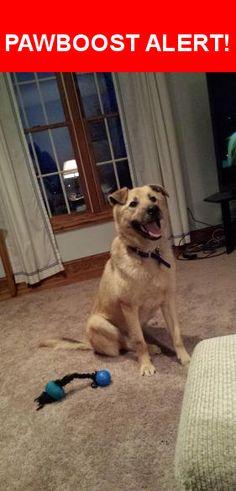 Please spread the word! Buddy was last seen in Monee, IL 60449.    Nearest Address: Near W Saddle Ridge Dr & Mannheim Rd