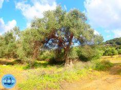 April-vakanties-naar-Kreta-4 Crete Greece, Golf Courses, Country Roads, Island, Greek Language, Vacations, Summer, Islands