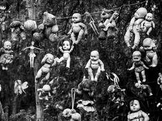 """Sie hängen an Bäumen, baumeln im Wind, starren mit leerem Blick auf das Meer. Tausende verstümmelte Puppen sind auf dem Eiland """"Isla de las Muñecas"""" zu Hause. Seit nunmehr 50 Jahren jagen sie selbst Hartgesottenen Schauer über den Rücken, denn sie sind angeblich lebendig… Auf..."""