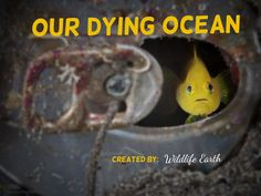 """Our ocean is dying! If humans are sooo intelligent, then why are we killing the planet for money and for our own personal needs?! If we are really smart, then we should fix our mistakes before it's finally too late! Join """"Our Dying Ocean"""" group board to show that you want a better world for not only us, but all of the wildlife we share this world with! - Wildlife Earth on Pinterest."""
