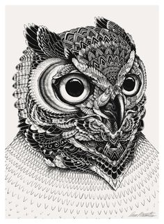 Owl portraits by Iain Macarthur, via Behance