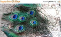 Year End Sale Peacock Feathers 7 Feathers 2in by CherylsGoodStuff