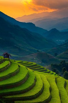 Rice Terrace, Vietnam photo by ratnakorn