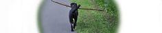 …wenn der Labrador jeden Hasen apportiert… Insects, Animals, Animales, Animaux, Animal Memes, Animal, Animais, Dieren