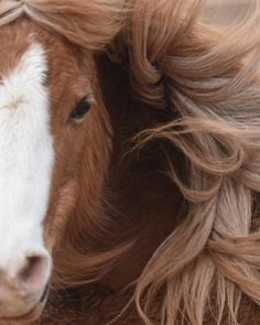 Winter Horse, Animals Beautiful, Beautiful Horses, Animal Society, Wild Spirit, Horse Photos, Good Hair Day, Horse Art, Cool Hairstyles